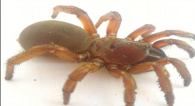 العثور على أنواع جديدة من العناكب النادرة في كوينزلاند