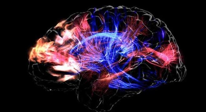 علماء يحاولون تجديد وإحياء المخ الميت