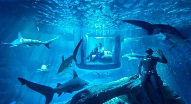 ليلة مع أسماك القرش