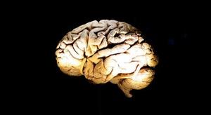 اكتشاف ثوري.. المخ ي