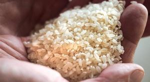 تحذير من تناول الأرز
