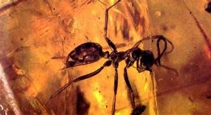 نملة عمرها 99 مليون