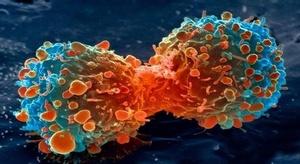 اكتشاف أجسام مضادة ق
