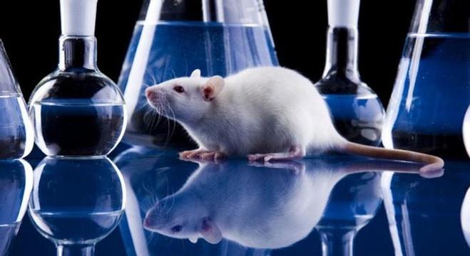 العدوانية تسبب نشوء خلايا عصبية جديدة في الدماغ