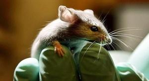 تجربة تجميد الفئران