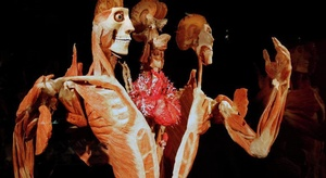قريبا.. جسم الإنسان