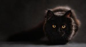 فتاة تنقذ قطة من الش