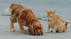 أيهما أذكى القطط أم